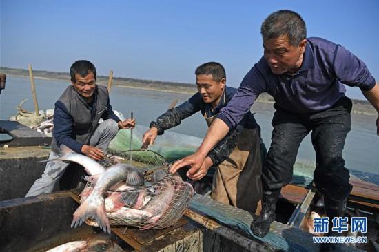 (社会)(5)鄱阳湖:人欢鱼跃冬捕忙