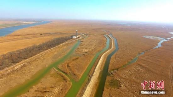 航拍江苏盐城沿海滩涂 百万亩芦苇构成金色海岸线