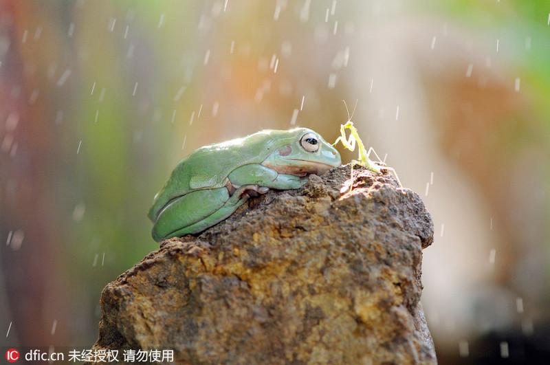 舞蹈青蛙趴的正确步骤