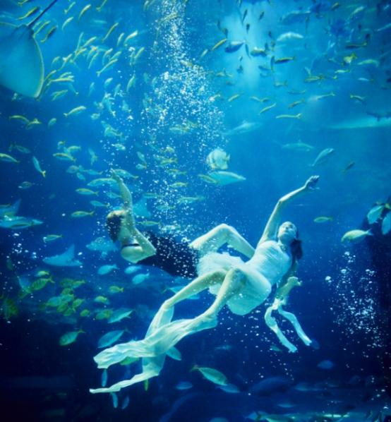 壁纸 海底 海底世界 海洋馆 水族馆 桌面 554_598