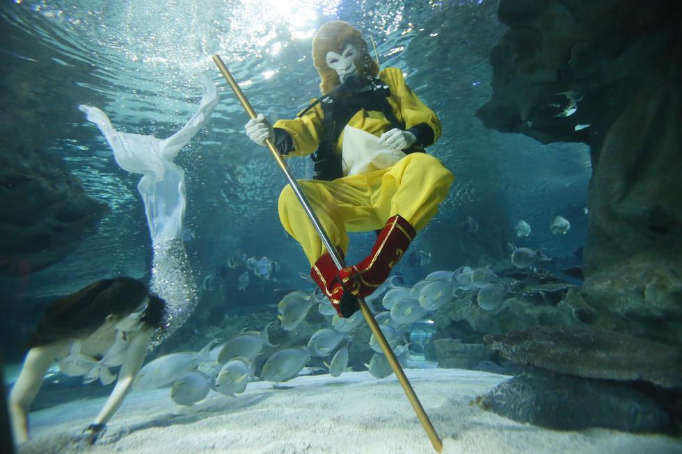 """北京,一只""""金猴""""在海底世界长达120米的水下"""