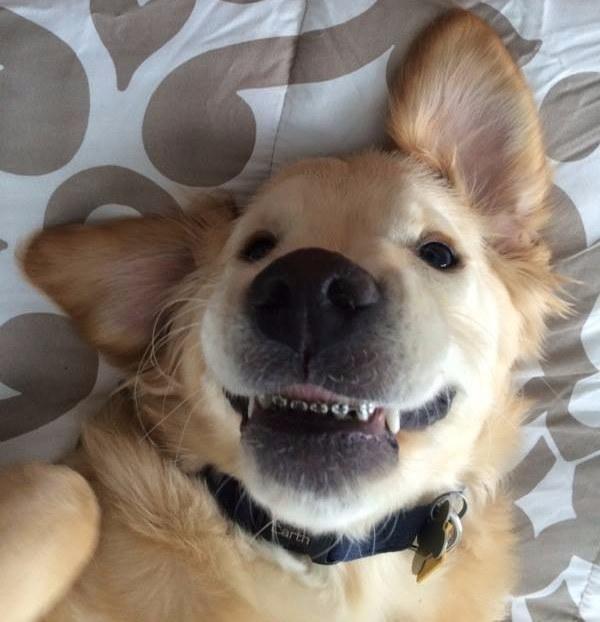 动物带牙齿的嘴巴制作