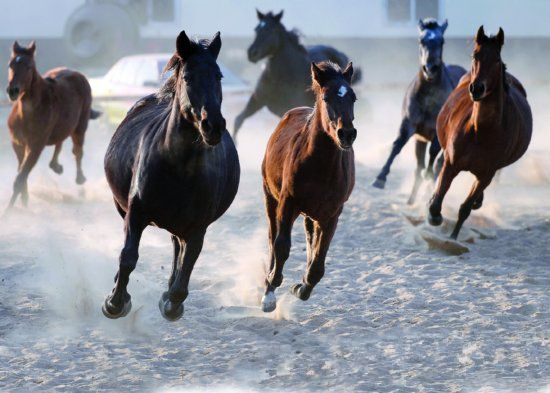 全球颜值最高的马 配种一次3万元