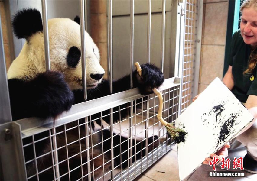 """奥地利动物园大熊猫""""挥毫作画""""(组图)"""
