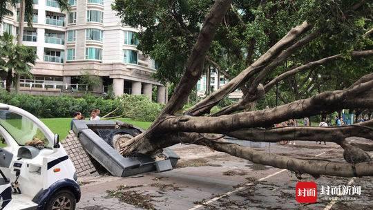 """台风""""山竹""""肆掠广州后 最受伤的是行道树"""