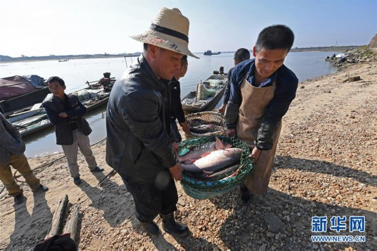 (社会)(4)鄱阳湖:人欢鱼跃冬捕忙